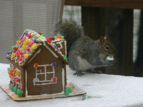 squirrel eating a gingerbread house